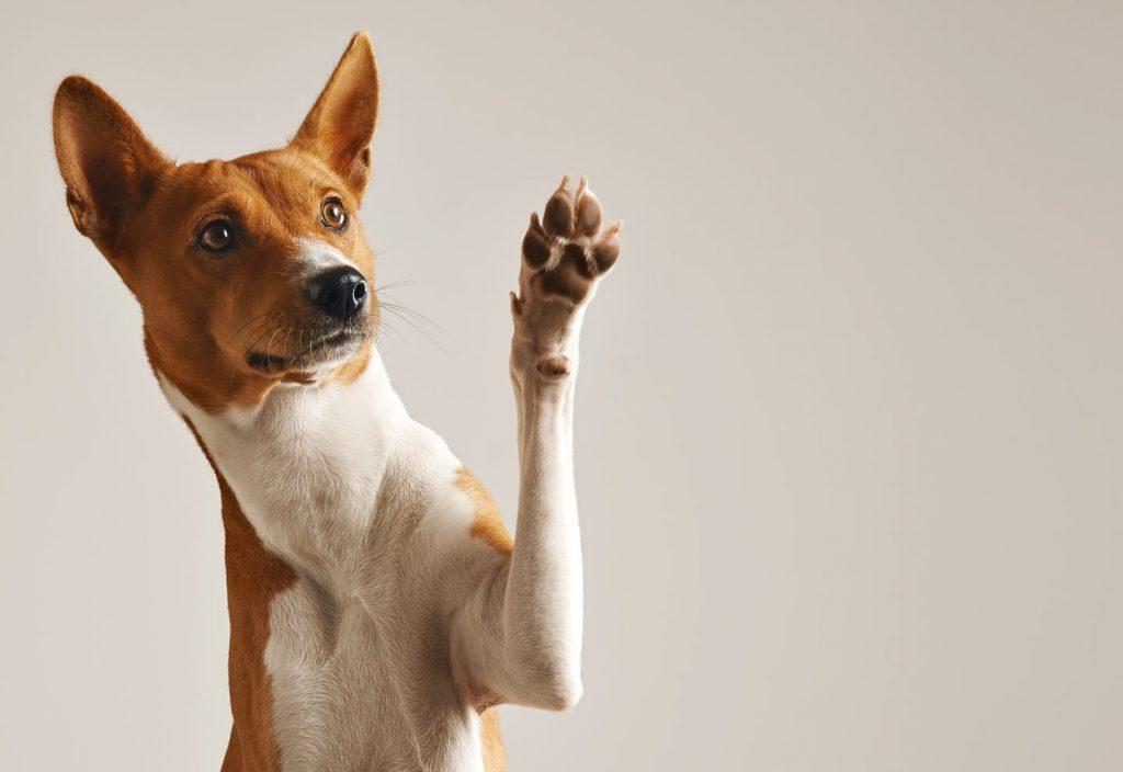 Huis hondvriendelijk feature image 01